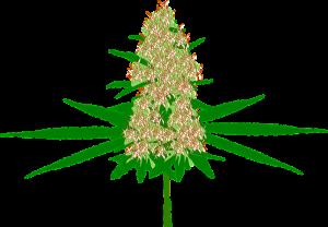 sacred plant